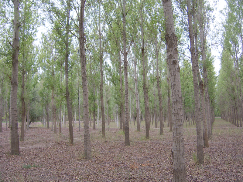 WATER: Dataset of the structure parameter measurements for afforested forest in the Zhangye city foci experimental area (2008)