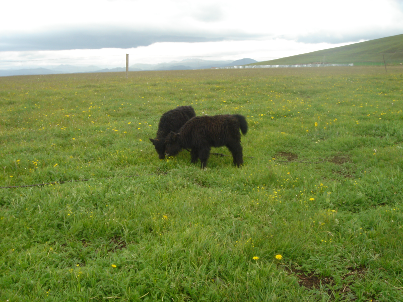The observation dataset of the Guoluo meadow ecosystem on the Tibetan Plateau (2005-2009)