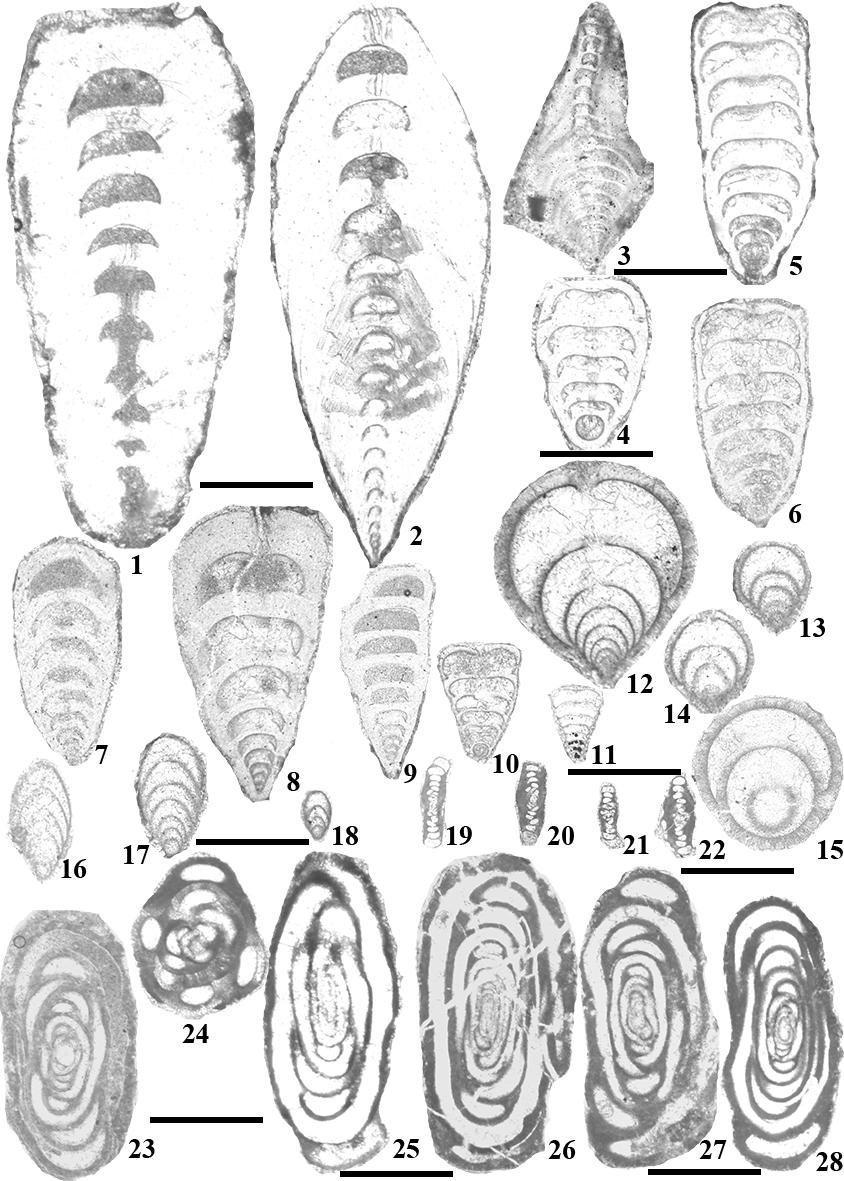 Identifications of Permian fossils from the Mujiucuo section, Xainza County, Tibet