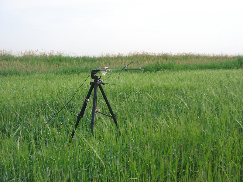 WATER: Dataset of ground truth measurement synchronizing with MODIS in the Linze grassland foci experimental area on Jun. 10, 2008
