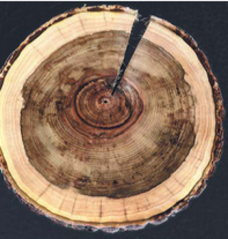 Tree ring width and reconstructed precipitation soil water condition data series of the Northeastern Tibetan Plateau and dating data of the Delingha Area (1580B.C.-2006A.D.)