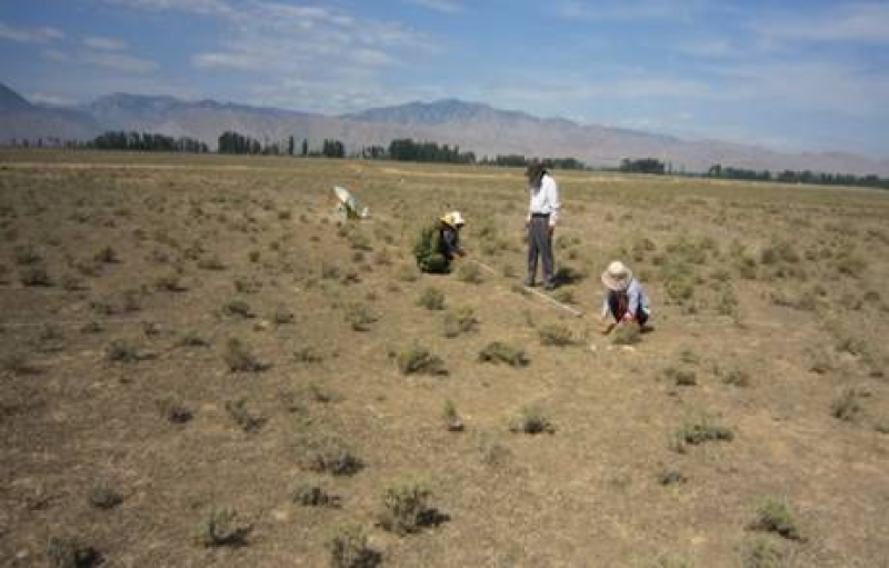 The annual ecological investigation data of desert vegetation with different desert types in Heihe River basin (2011)