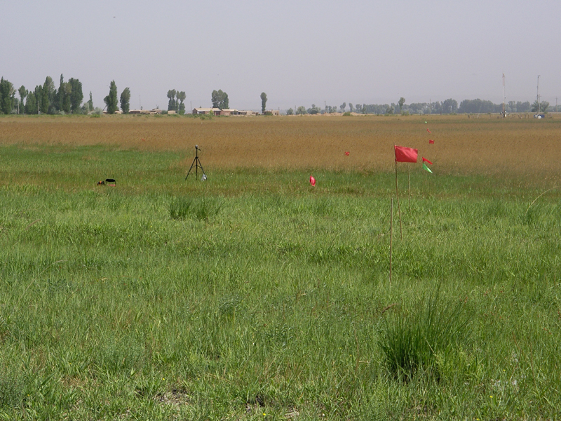 WATER: Dataset of ground truth measurement synchronizing with ALOS PALSAR in the Linze grassland foci experimental area on June 10, 2008