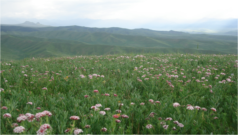 Associative datas of diversity and environmental factors of grassland main plants functional traits in Heihe River Basin (2013)