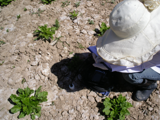 WATER: Dataset of ground truth measurement synchronizing with ALOS PALSAR in the Linze grassland foci experimental area on Jun. 27, 2008