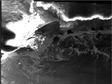 Sentinel-1A SAR dataset of Antarctic and Greenland areas (2015)